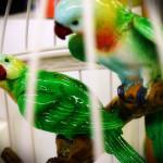 Papageien im Käfig von GILDE