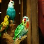 Papageien von GILDE